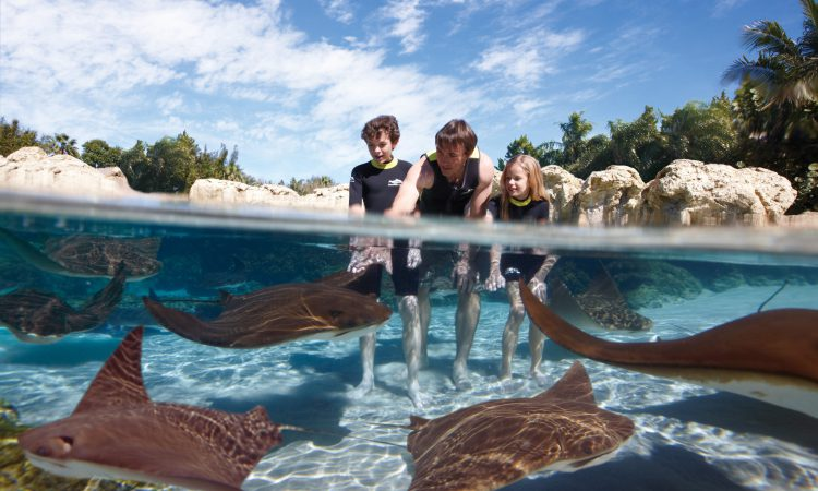 Discovery Cove Tips - Family Swimming with StingRays