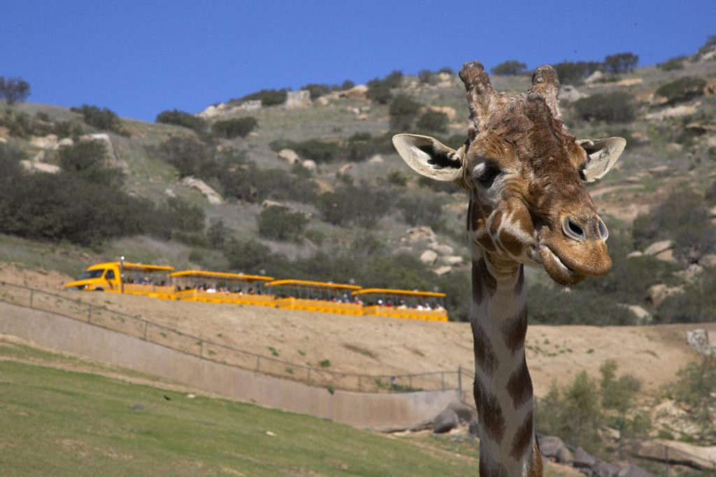 Check out the San Diego Zoo Safari Park when searching for things to do in San Diego with teenagers.