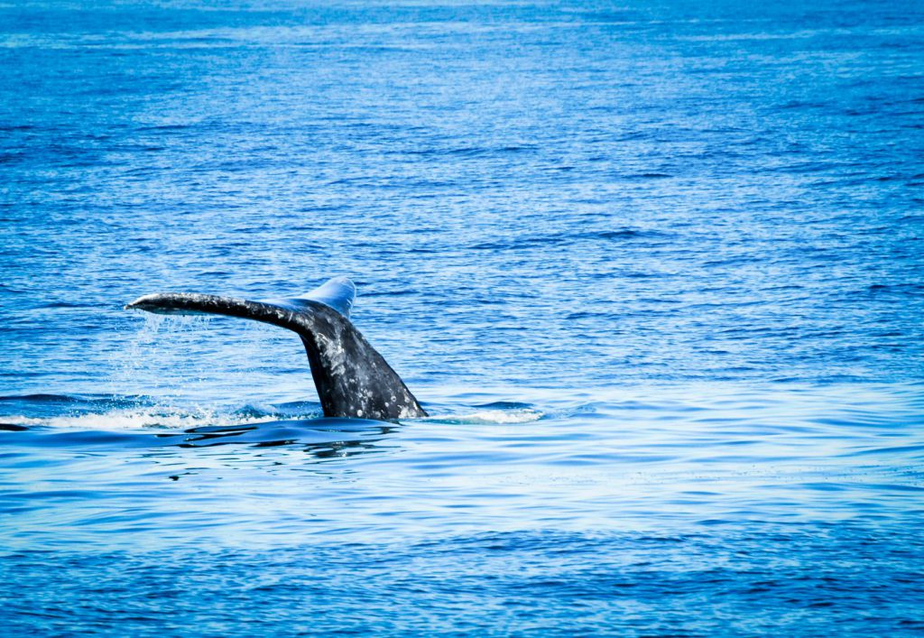 Go on a whale watching cruise as one of the many things to do in San Diego with teenagers.