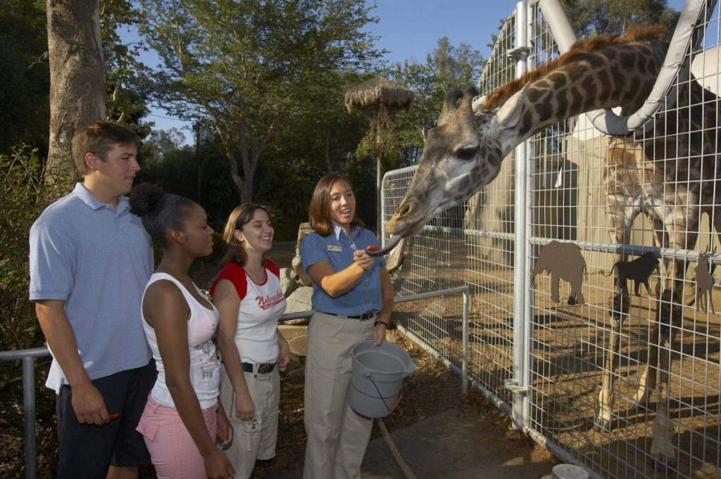 The San Diego Zoo is among the best things to do in San Diego with teenagers.