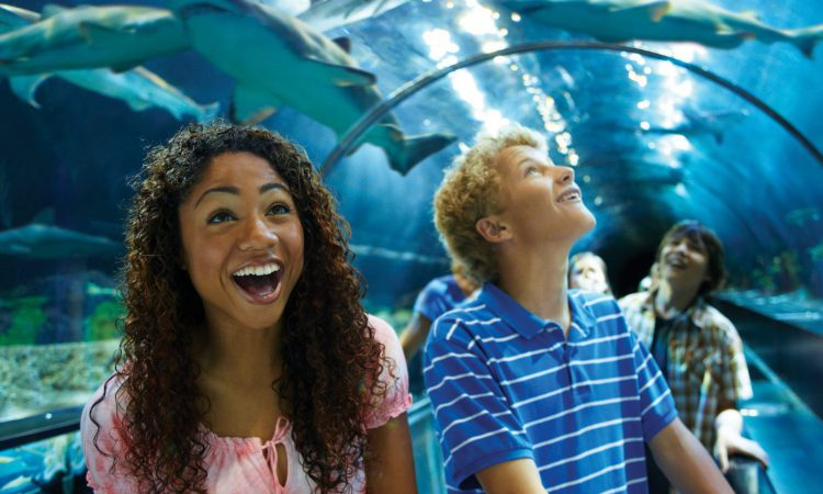 One of the coolest things to do in San Diego with teenagers is SeaWorld San Diego.
