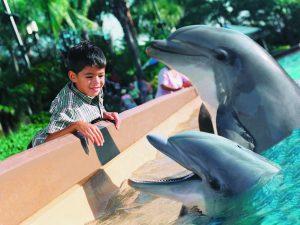 A boy visiting the dolphins at SeaWorld Orlando
