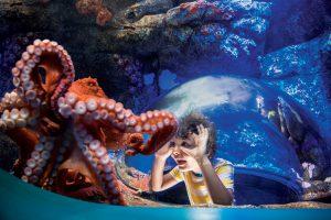 SeaWorld Orlando is full of extra amazing experiences