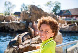 tips on visiting SeaWorld Orlando