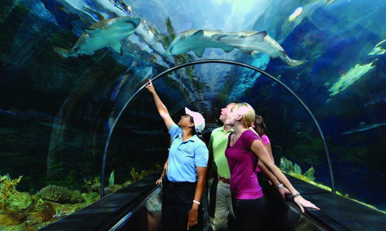 5 Expert Tips on Visiting SeaWorld Orlando
