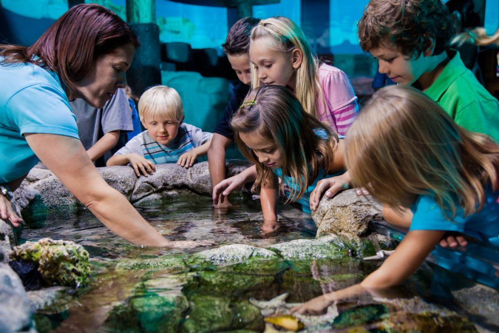 Children discover an underwater world at the touchpool at SEA LIFE Orlando Aquarium