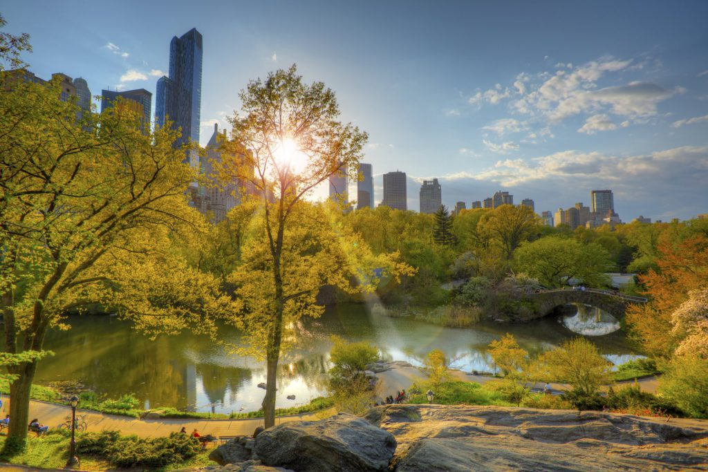 Sun shines through Central Park in NYC