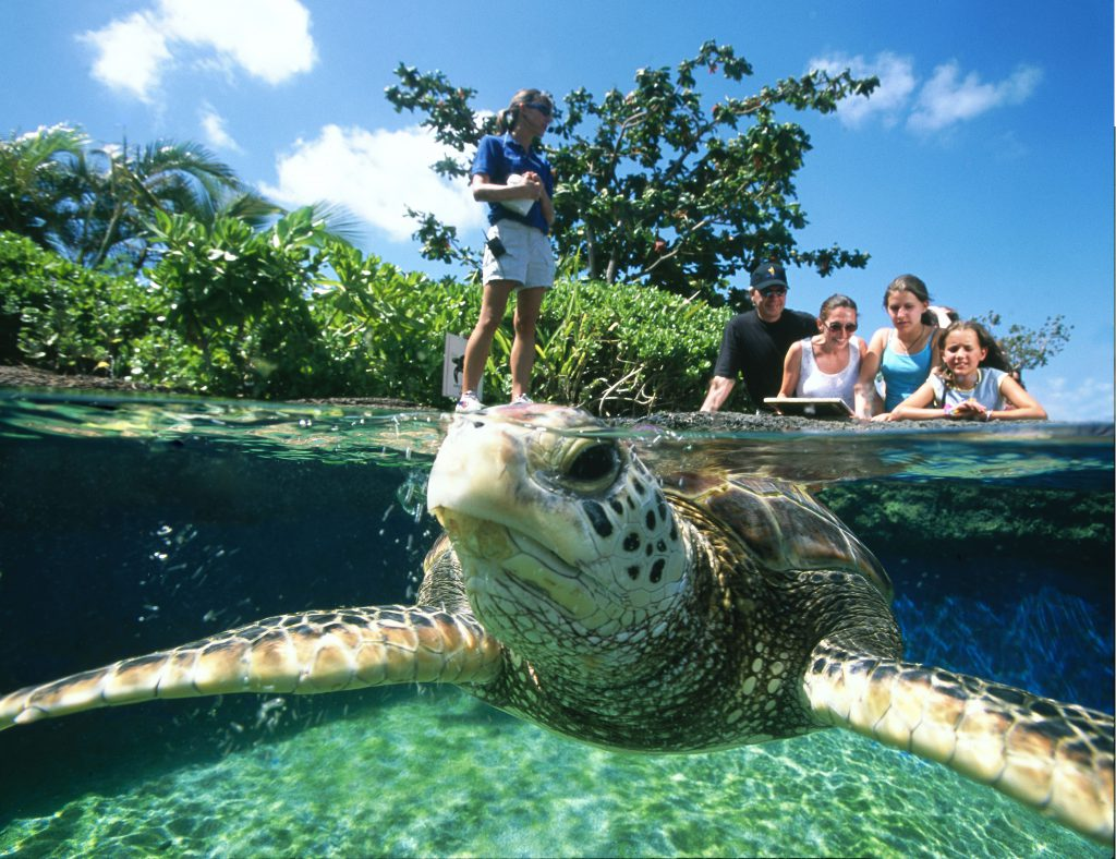 Affordable activities in Maui include the Maui Ocean Center