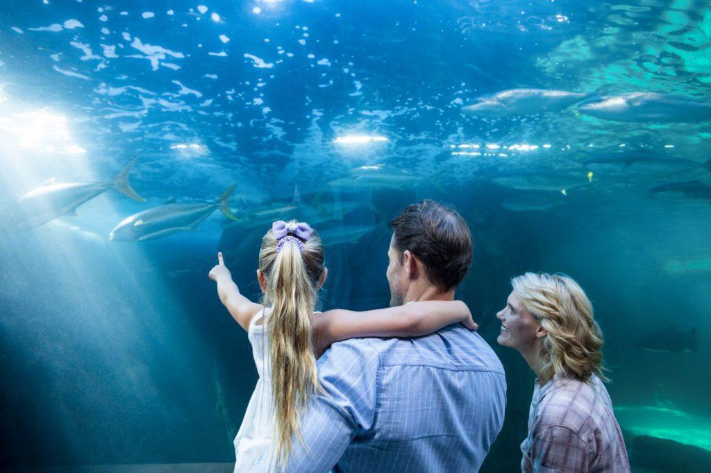 Family pointing at dolphin at aquarium