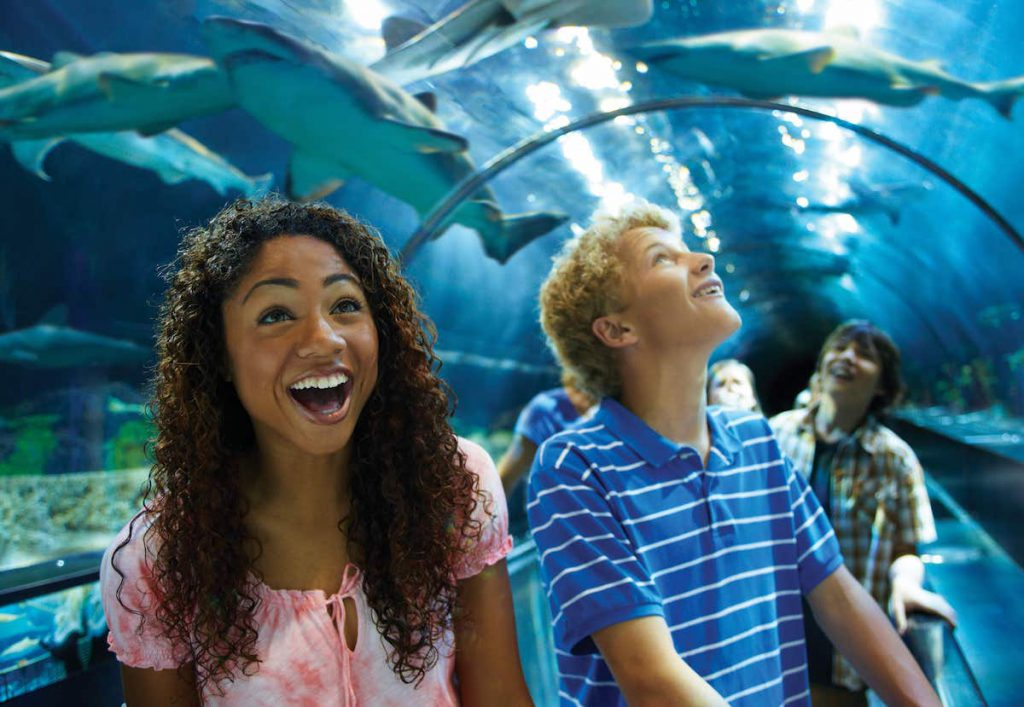 Add SeaWorld San Diego to your San Diego family vacation itinerary