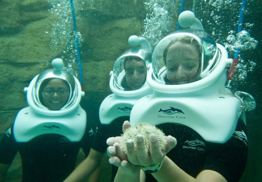 Discovery Cove isn't your average Orlando theme park