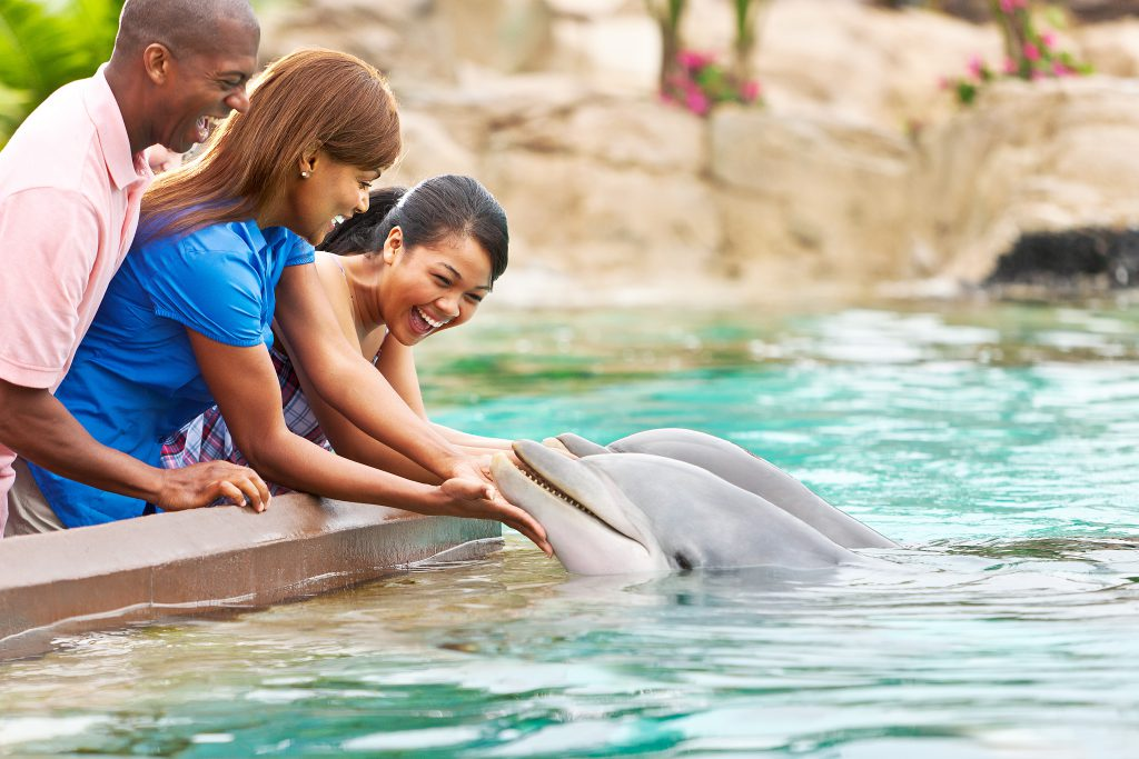 SeaWorld Orlando Tips