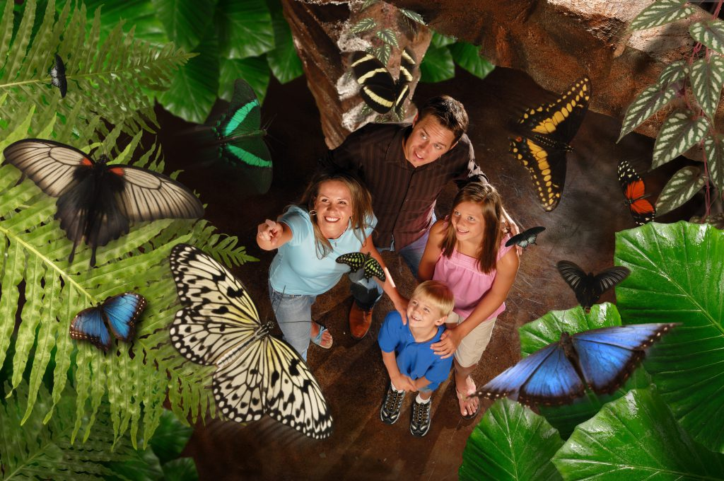 Things to Do in Branson with Toddlers