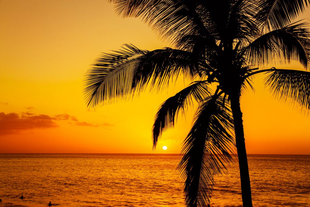 A palm tree at sunset with the ocean in the horizon