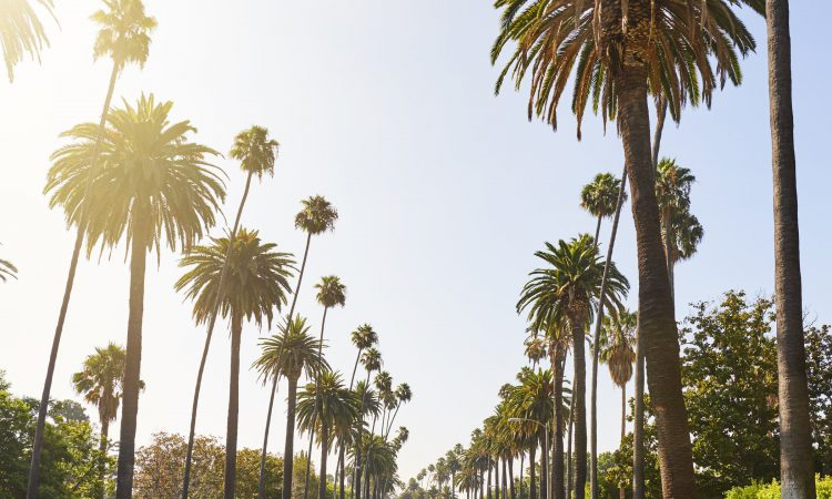 Best Time to Visit Los Angeles