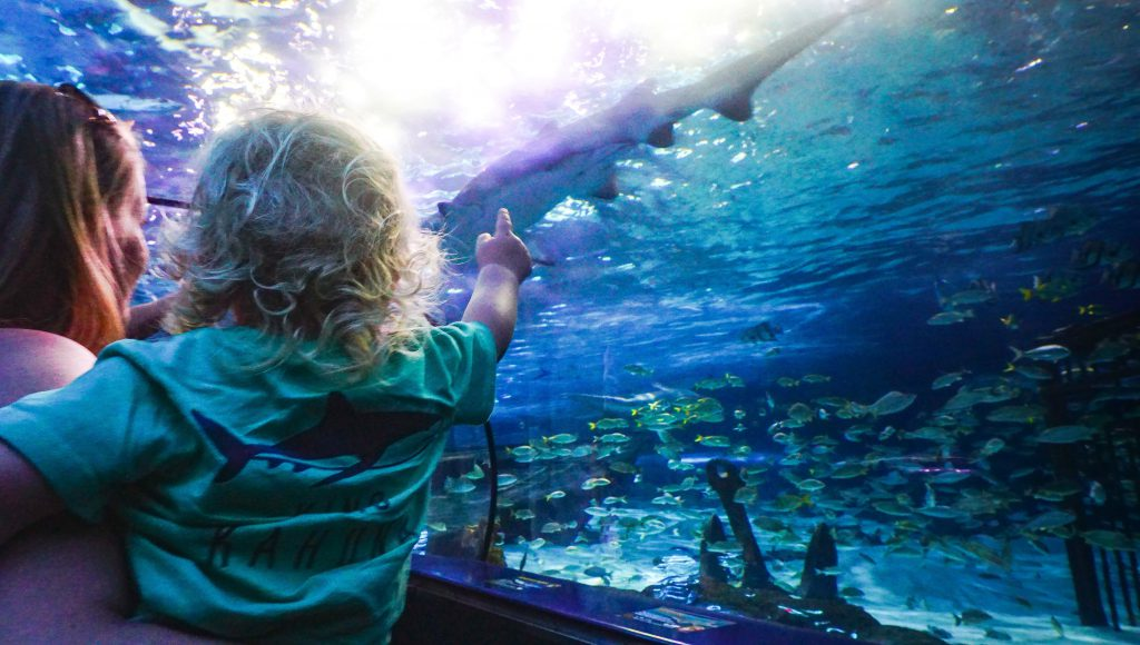 A blond, curly haired child is held by their parent as they point and look at fish at Ripley's Aquarium in Myrtle Beach