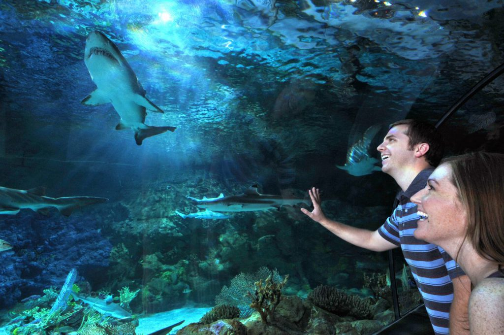A man and a woman look at a shark in an aquarium