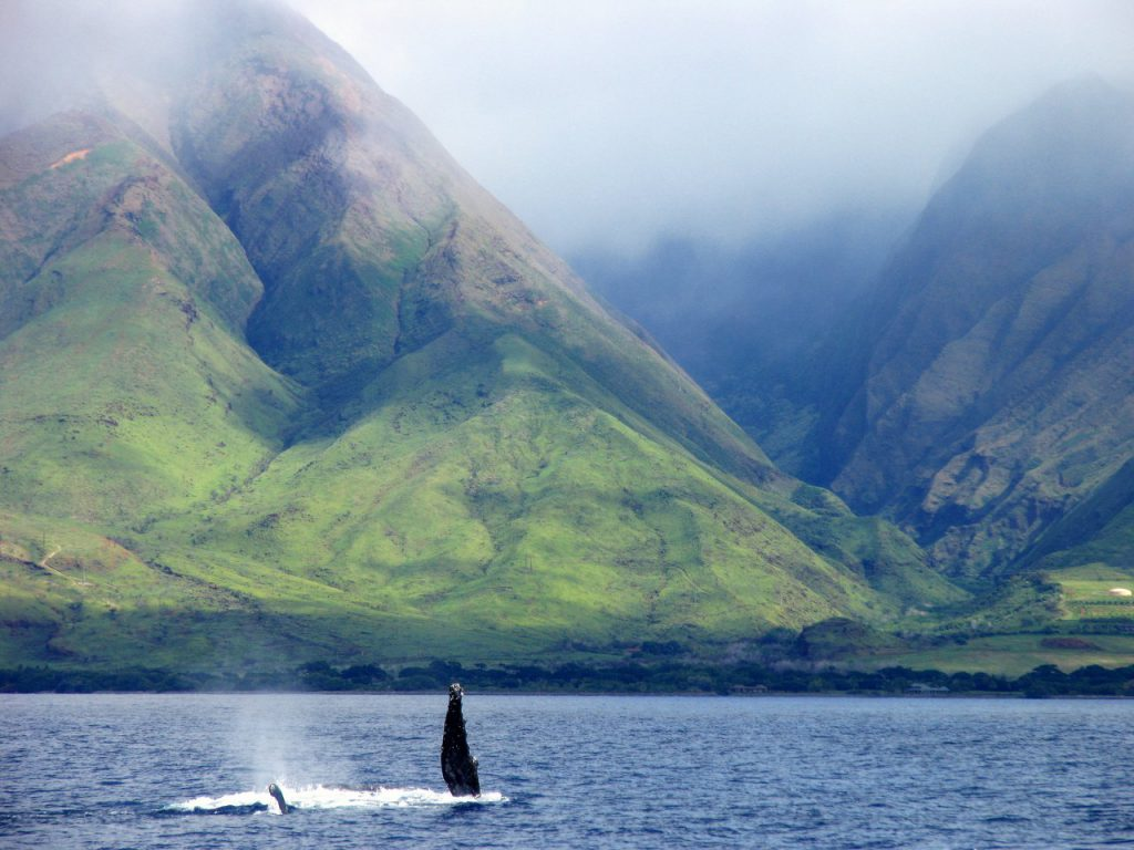 A whale fin sticks out of the water in front of the Hawaiian mountain ranges