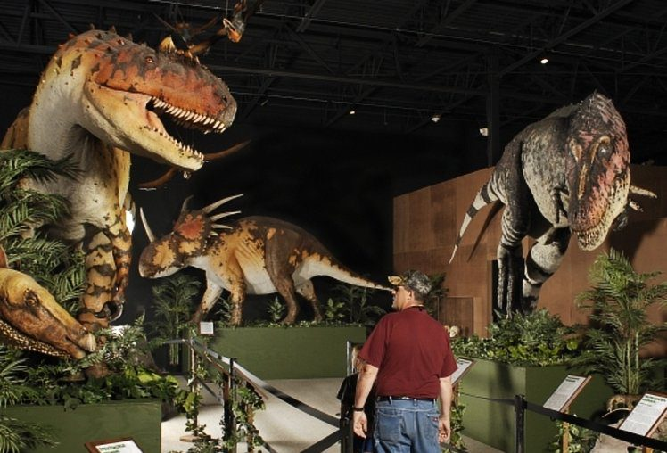 A man walks through a row of t-rexs at one of the top Branson museums.