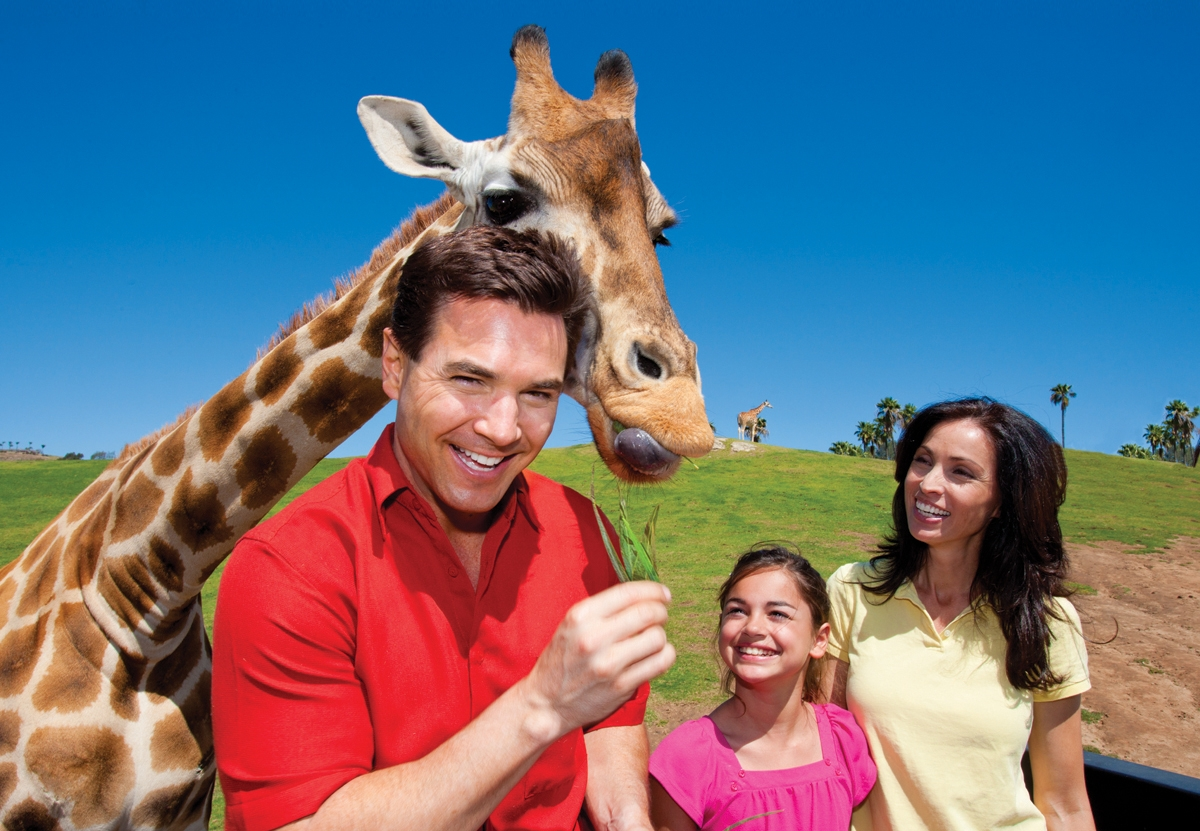 A dad, daughter, and mom stand next to a giraffe at San Diego Zoo Safari Park during their weekend in San Diego
