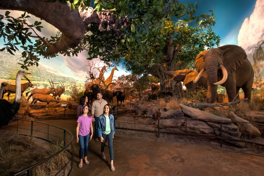 A family tours a hall of animals at one of the top Branson museums.