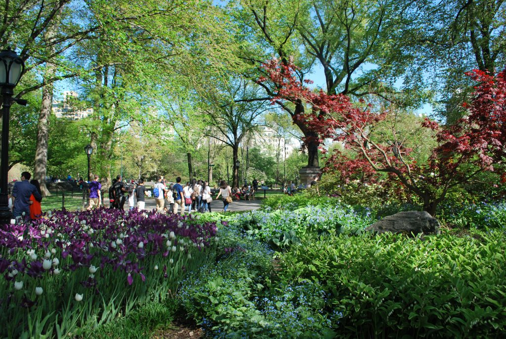 Visitors go on a walking tour of Central park