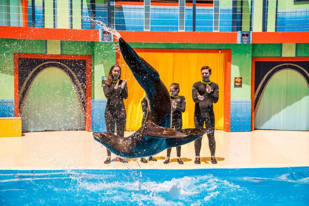 Attending a show is one of the top SeaWorld San Antonio tips