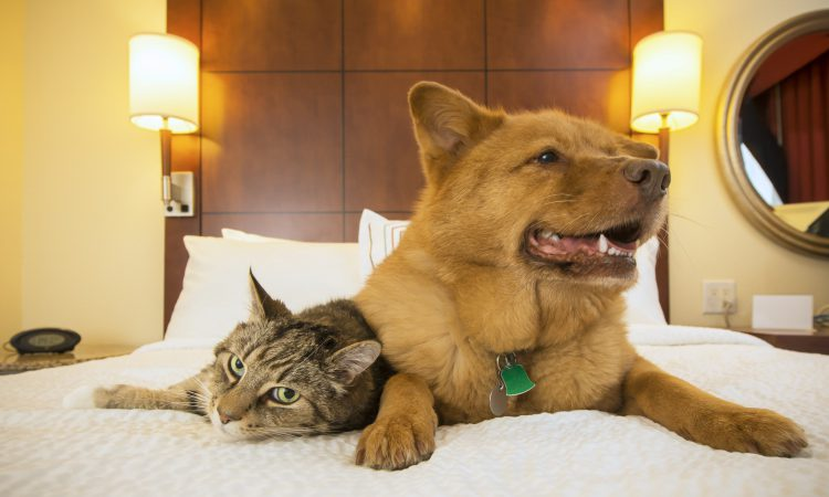 Pet Friendly Hotels in Gatlinburg
