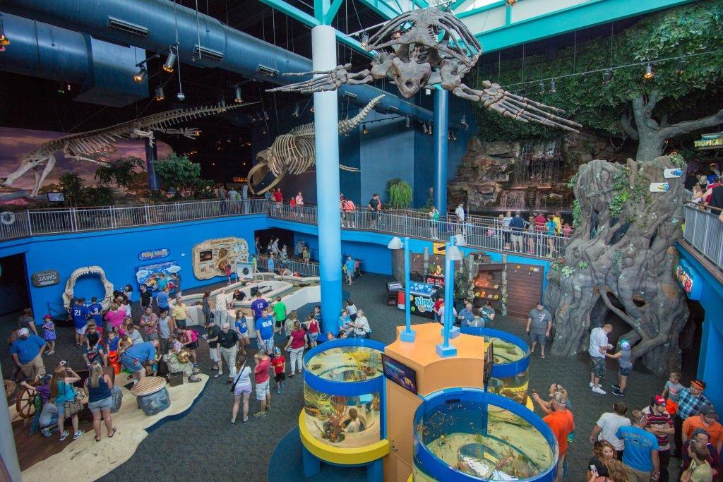What to Expect at the Gatlinburg Ripley's Aquarium