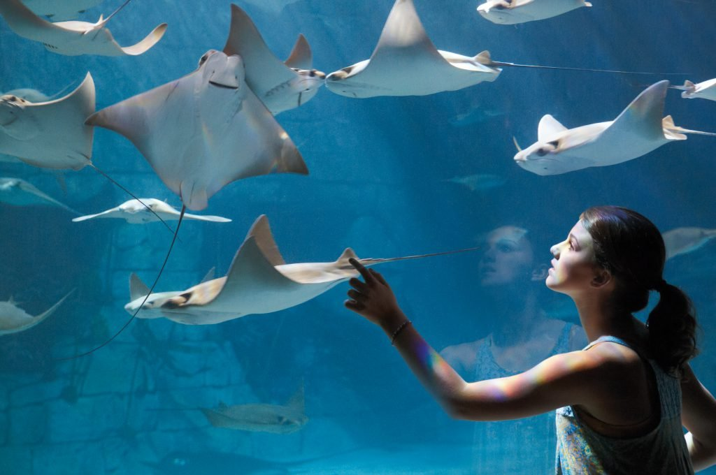 A girl reaches for manta rays. Use these SeaWorld San Antonio tips to have the best day ever.