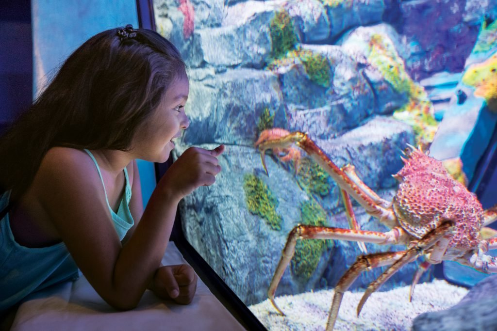 Use our SeaWorld San Antonio tips for your next visit