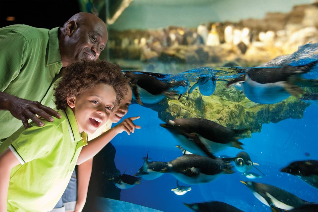 Don't forget to visit the Animal Conservation Center during your SeaWorld San Antonio trip