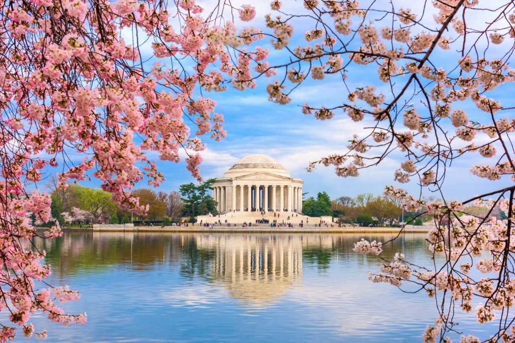 Viewing cherry blossoms in blooms is one of the most beautiful free things to do in Washington DC