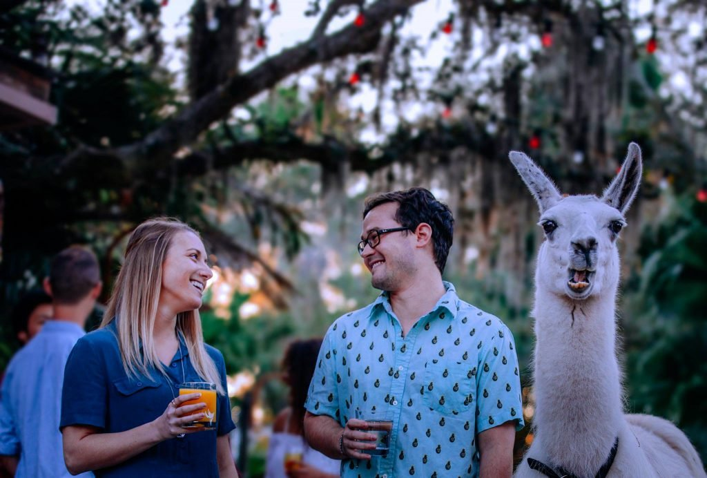 Grab a brew and tour a zoo as one of the top things to do in Tampa at night