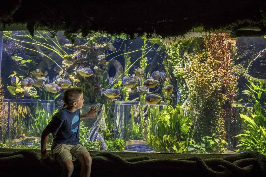 Take a trip to the best aquariums in the U.S.