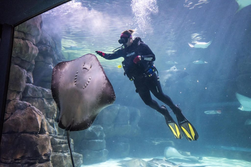 Take a trip to Ripley's Aquarium of the Smokies, among the best aquariums in the U.S.