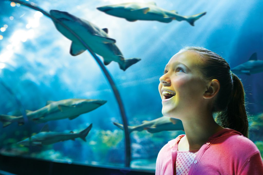 A trip to SeaWorld should also be part of your 3 days in Orlando