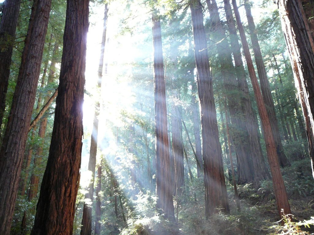 Among the top day trips from San Francisco is Muir Woods