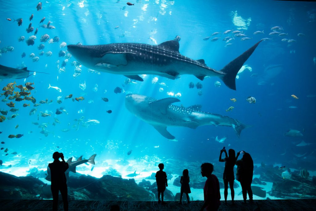 The Georgia Aquarium is one of the best things to do in Atlanta for couples