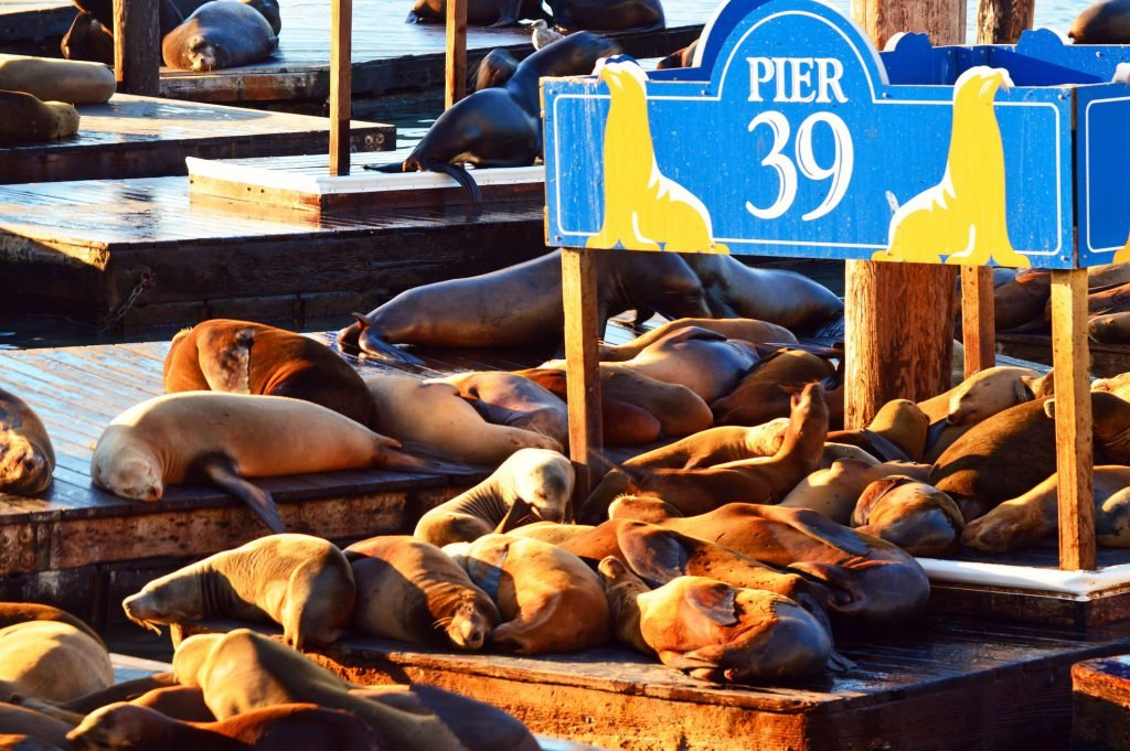 Make sure Pier 39 is on your San Francisco bucket list