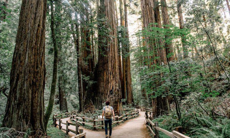 Take a trip to Muir Woods