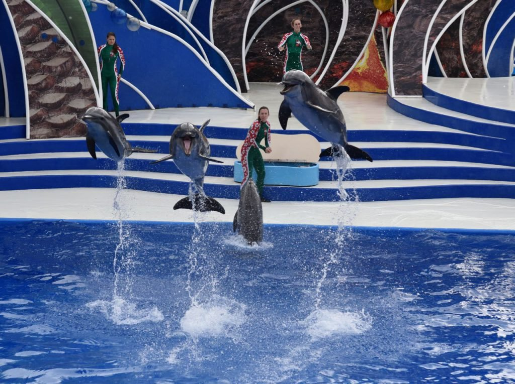 SeaWorld Orlando Events